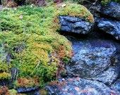 "Signed Color Digital Art Landscape Photograph Print ""Storm King Color Moss Rocks"" By Anne Drennen"