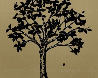 Sparse Fall Tree Clip Art, Royalty Free Graphic, Digital Download, design element, commercial use digital stamp