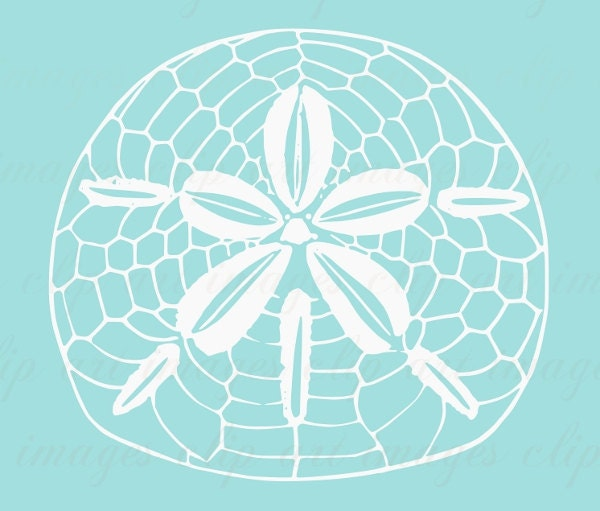 Blue sand dollar illustration - photo#17