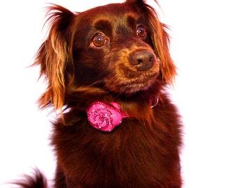 LuxeMutt-Pink Rosalicious Swarovski Dog Collar