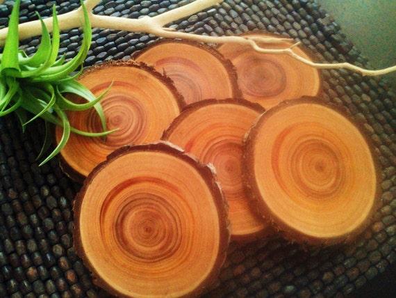 BEAUTIFUL Cypress Tree  Coaster slices