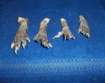 4 muskrat feet real animal bone taxidermy weird craft parts claws