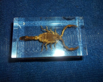 Scorpion paper weight bug insect real weird part piece taxidermy