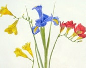 Iris and Fresias - Original botanical floral Watercolour Painting