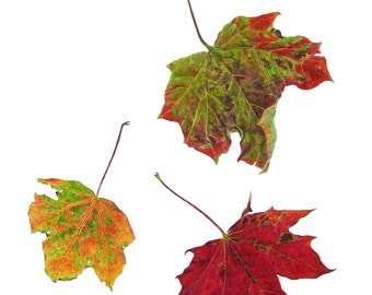 Falling Leaves - greetings card