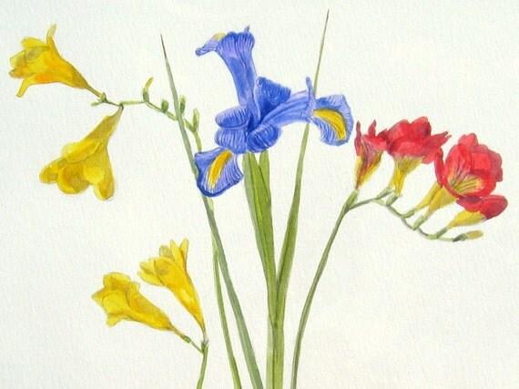 Iris and Fresias - Original botanical floral Watercolour Painting