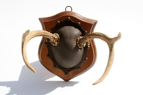 Vintage lodge-style deer antler trophy mount