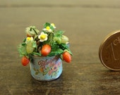 Miniature tin  with plan of strawberries