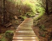 Sitka Path 1 334  Fine Art Digital Photo 5 x 7