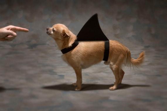 Shark Dog 625  Fine Art Digital Photo 8x10