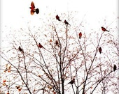 Flight- Red, Fine Art, Birds, Home Decor, Birds, Woodland, Forest, Nature, Autumn, Christmas