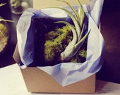 GIFT // Surprise Air Plant Delivery