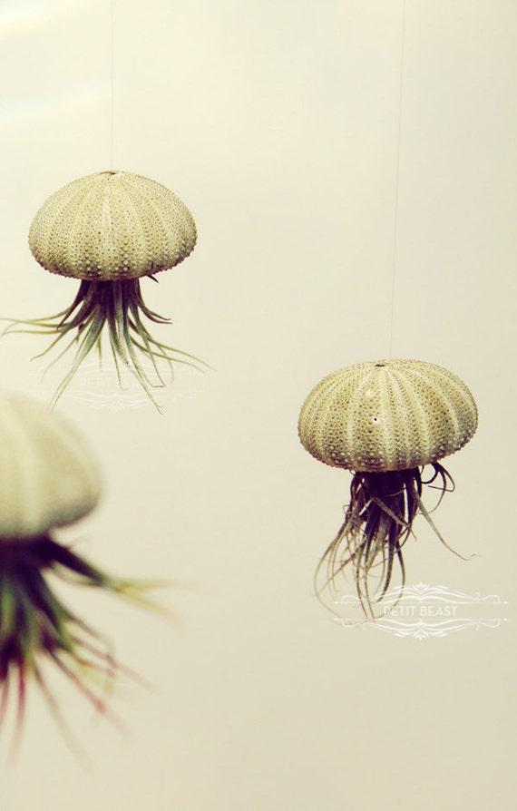 THREE Green Jellyfish Air Plants // Sea Urchins Hanging Art Installation Wedding Favor Decor Gift Mini Terrarium Kit DIY cute tillandsia