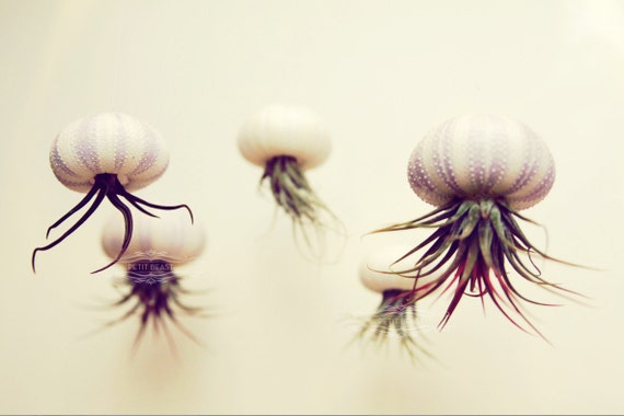 Five Stripey Jellyfish Air Plants // Sea Urchins Hanging Art Installation Wedding Favor Decor Terrarium Kit DIY tiny