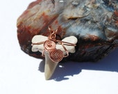 Celebrate Shark Week - Fossilized Shark's Tooth Pendant 3 -- 45 Million Years Old