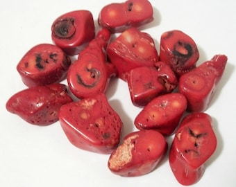 Bamboo Coral Reef Beads