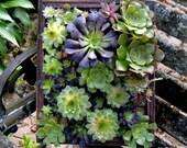 Framed Succulents Living Art Vertical Garden