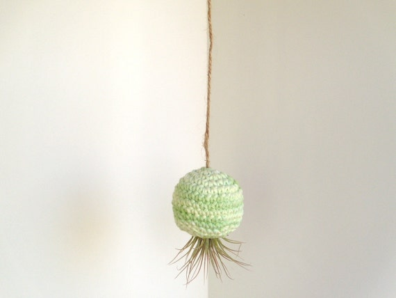 Air Plant in Hanging Pod Mint Green Swirl
