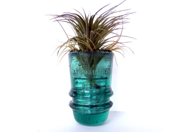 Vintage Glass Insulator Housing Air Plant