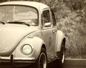 Peace Bug Black & White Fine Art Photography 8x10