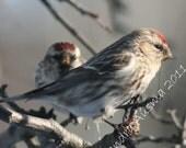 SALE Feathered friends 2013 bird photo calendar 12 month 5 x 7