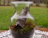Fairy Lawn Forest Moss Terrarium