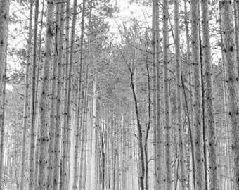 Walk Through the Forest 11x17