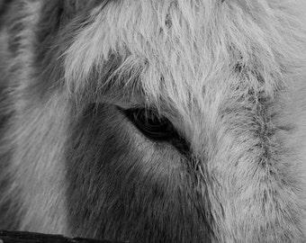 Fine Art Black and White Miniature Donkey 8.5x11