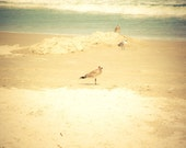 Seagulls - 8 x 10 Fine Art Print, ocean, sea, sand, waves, daytona beach, birds on shore, beige and seafoam green