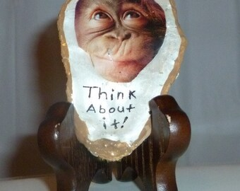 Think about it monkey in a Oyster Shell.