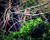 Jerome, AZ. Treescape