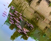 Lily Pad Reflections Fine Art Photograph