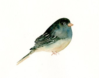 BLACK eyed JUNCO by DIMDImini 7x5inch Print