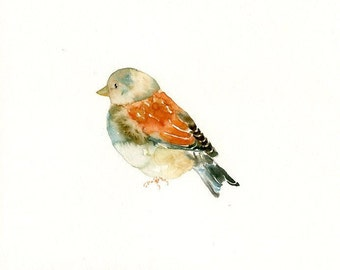LINNET by DIMDImini ACEO print