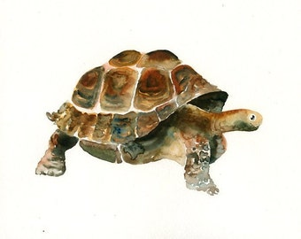 GALAPAGOS Tortoise -7x5inch Print-Art Print-animal Watercolor Print-Giclee Print