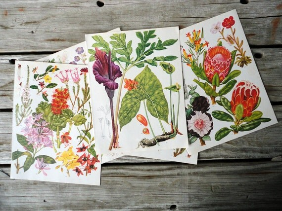 Set of 10 Wildflower Plates Illustrations