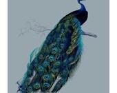 Archival Print  5x7 Stunning Peacock