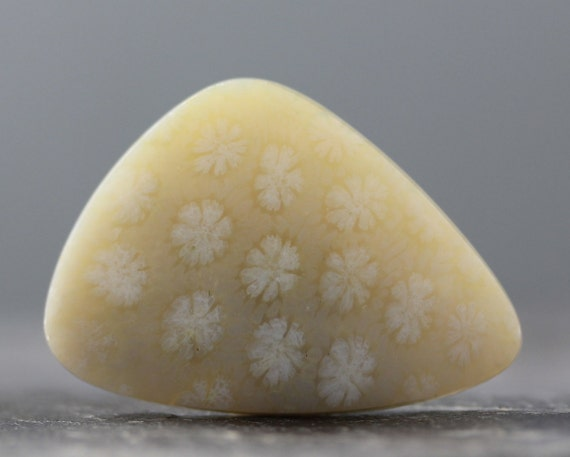 Translucent, Highly Agatized Natural Indonesian Fossil Coral Gemstone Cabochon - Free form Fossil Polished Bezel - 40mm (C766)