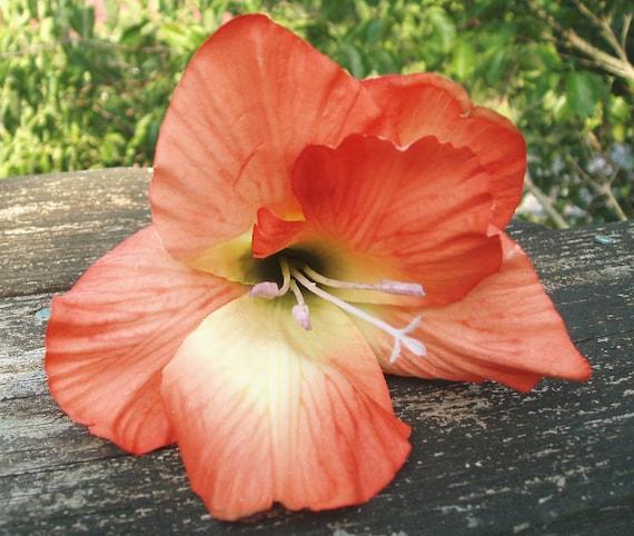 Orange gladiolus hair flower clip