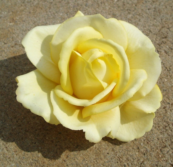 Yellow rose hair flower clip, realistic touch and feel
