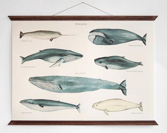Whales - vintage educational chart illustration