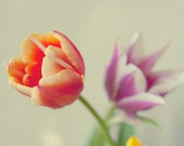 Tulips Flower Photograph. fine art still life. close up macro unbloomed spring dreamy home decor romantic gentle 8x12