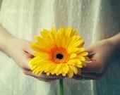 Creative conceptual fine art photograph, photo print, self portrait, yellow daisy, surreal, wall art, delicate, soft, 6x9