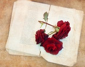 Art photography print for wall decoration - Vintage roses. Brown red home decor. Valentines day gift oht