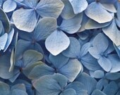 Blue Hydrangea greetings card, photo birthday card, pastel note card, blue photo thank you card.