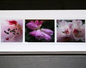 Blank Photo Greeting Cards (set of 5) - Pink Rhododendron