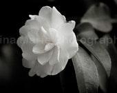 Single White Flower - 8x10 Photography Print