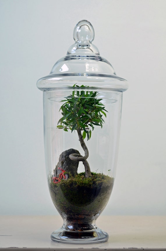 Apothecary Jar Terrarium 'Twisted' with tree, moss, and red bike
