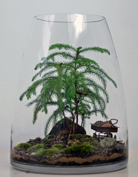 Forest Terrarium with Norfolk Island Pine, birdbath, and wagon