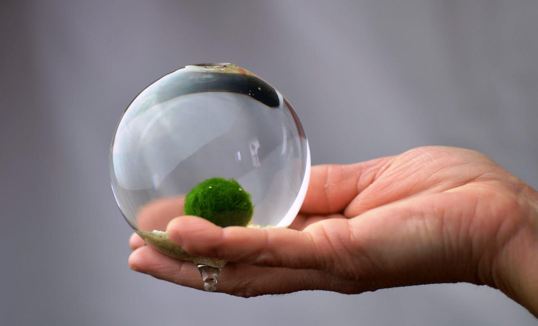Marimo terrarium japanese moss ball aquarium miniature for Marimo moss ball